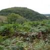 Smeekley Wood