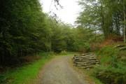 Track through Olwen Wood