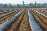 Fruit farming, Wargrave