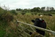 View across fields to Roddingheads