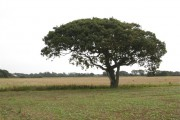 Tree on Farmland