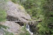 Fallen tree in Raven's Rock Gorge