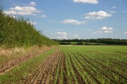 Field at Pampisford