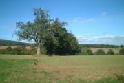 Farmland north east of Loughton