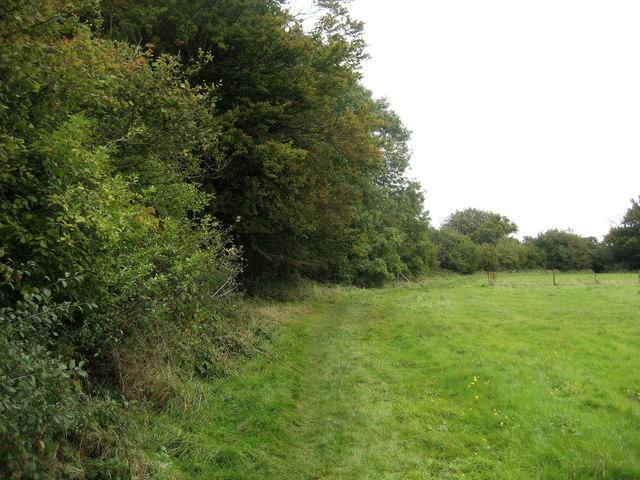Ridgeway by Langton Wood