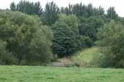 Grazing Land and Woodland near Alsager, Cheshire
