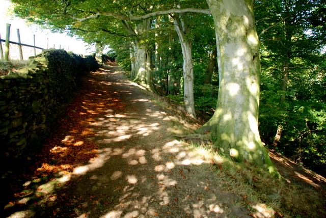 Track above Baslow
