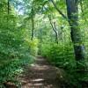 Woodland above Baslow