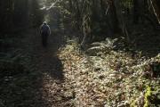 Path through Bowden Beer
