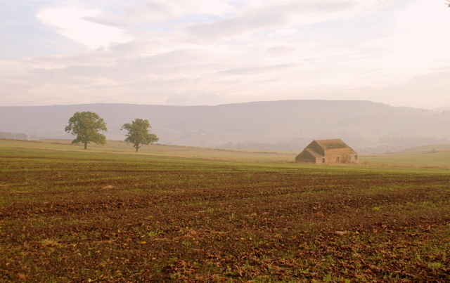 A misty morning on Oxpasture