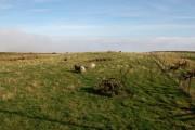 Sheep grazing at Borgue
