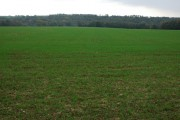 Winter cereals and Winstone Wood
