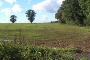 Field scene near Brundish