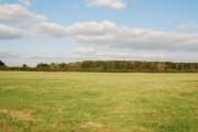 Field beside King's Court Wood