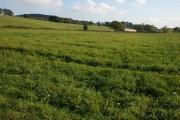 Farmland to the south-west of Mousehole Bridge