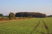Farmland and Round Maple Wood