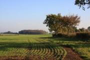 Farmland at Priory Green