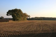 Farmland near Milden