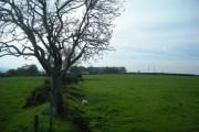 Footpath near Ty-llŵyd
