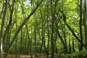 Busgrove Wood
