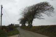 Wind-shaped tree near Thorne Farm