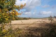 Looking across fields beside Low Lane, near Creeting St Mary