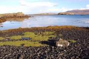 Shore of Loch Dunvegan