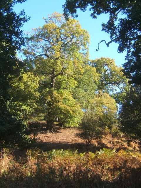 Trees and bracken, Sandy Hill