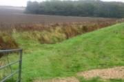 Farmland near Withybed Copse