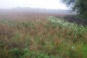Footpath towards Wilmingham