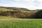 Langhillock Wood