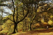Autumn in  Shotover park