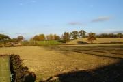 Farmland with pheasants