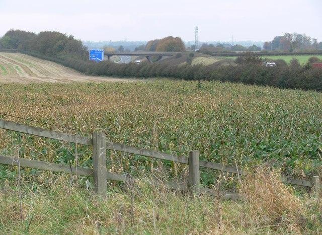 Farmland alongside the M1 Motorway