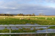 Winter grazing on the flats by Arabella