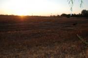Fields in Braiseworth