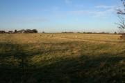 Sheep pasture at Barnstone