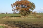 Farmland alongside Lambert's Lane