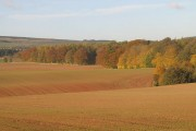 New crop, Langton