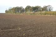 Windmill Plantation