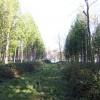 Within Big Wood