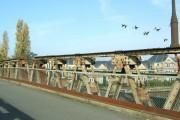 Geese over old Walton Bridge