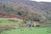 Farmland at Llanfrothen