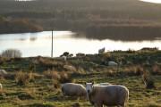 Loch Ussie