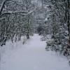 Murdostoun  woods in winter