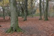 Beech woodland, Crickley Hill