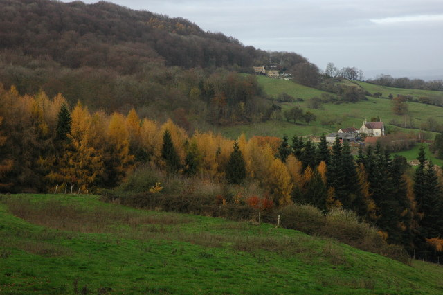 Larch trees above Witcombe