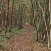 The Cotswold Way through Witcombe Wood