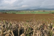 Crop field near Three Ashes