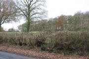 Deciduous woodland, Upleadon